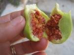 figs in meilia
