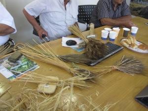examining wheat varieties